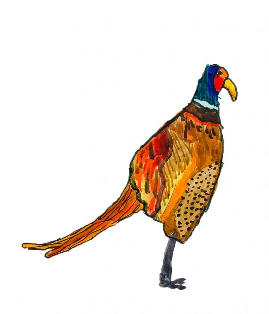 The Pleasant Pheasant